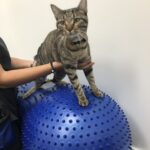 Cat physical therapy